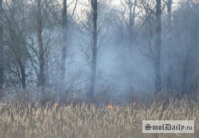 пожар, лес, пал травы