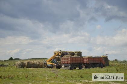 поле, сельское хозяйство
