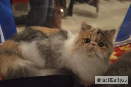 коты,выставка