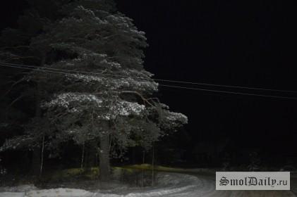 лес, сосна,