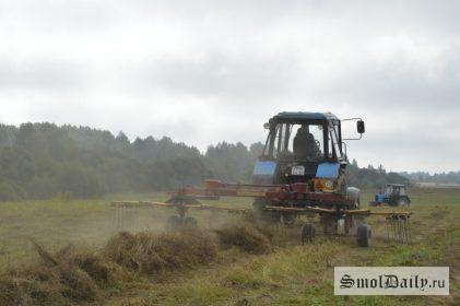 лен, поле, АПК, сельское хозяйство