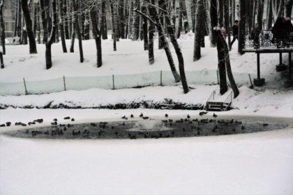 утки, лопатинский сад