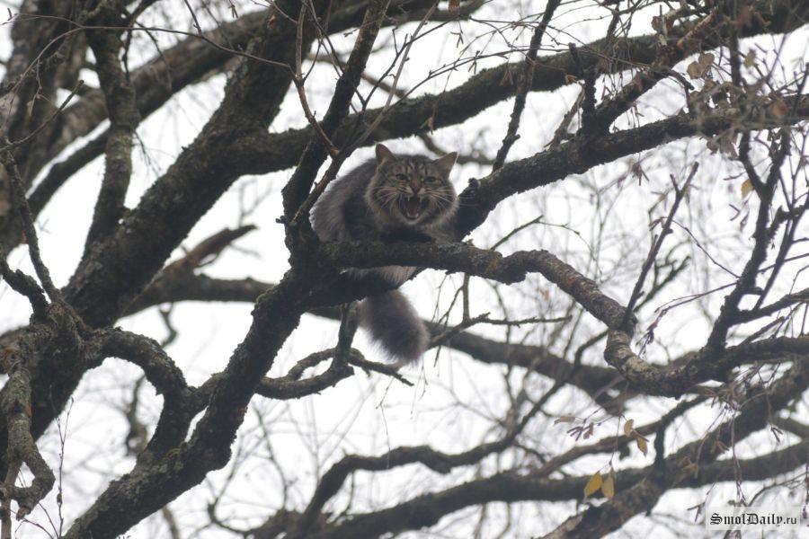 ВСмоленском районе cотрудники экстренных служб сняли сдерева обессилевшего кота