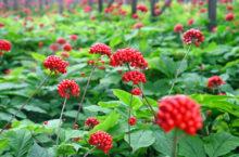 Фото: herbalpedia.ru